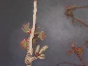 1Title-Spring-100-x-120-acrylic-on-canvas-2007-Astrid-MG-Rubie